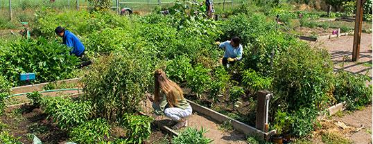 people doing sustainable gardening
